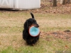 Bailey Frisbee