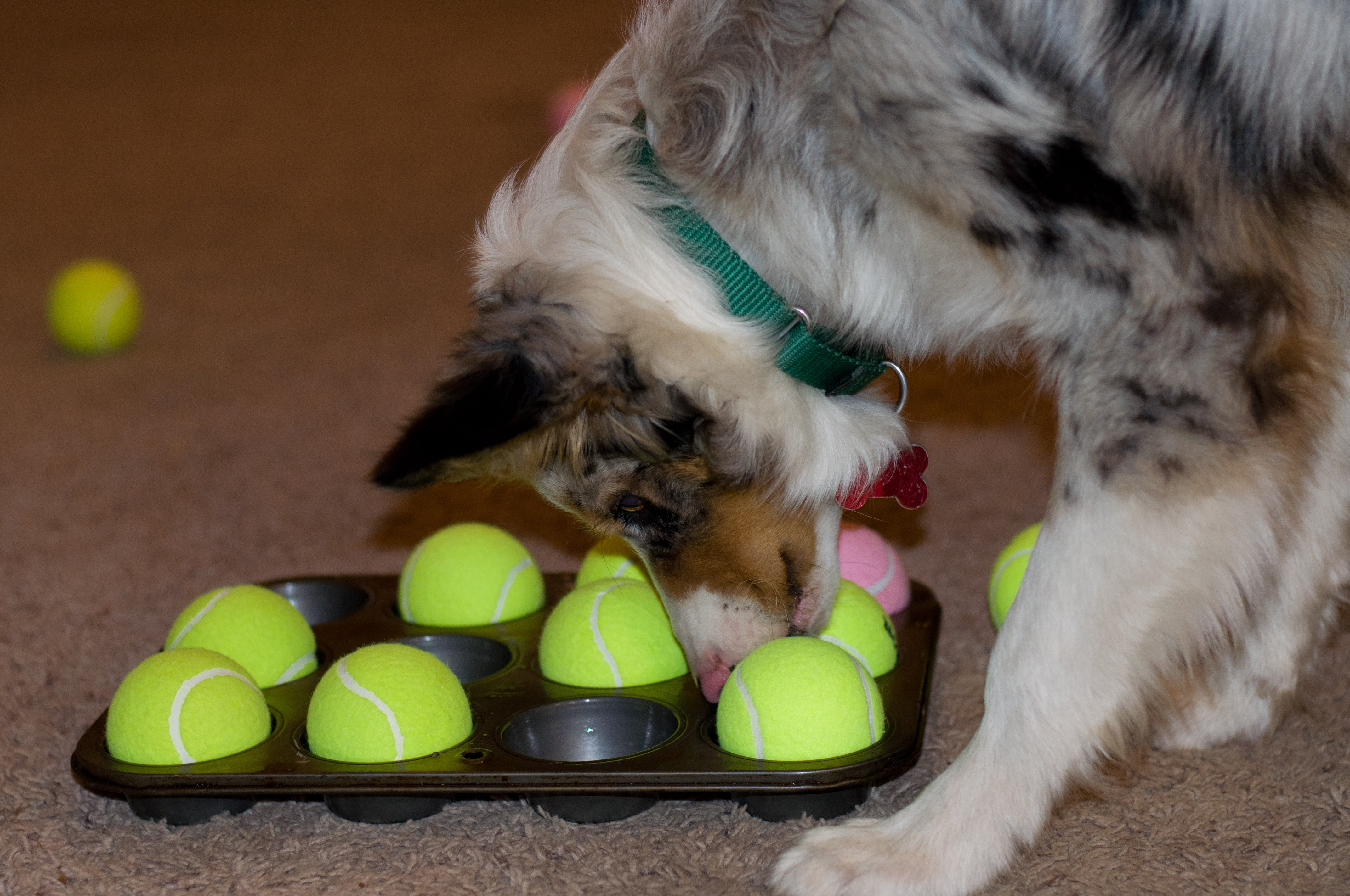 Brain Toys For Dogs