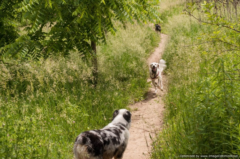 Dog Parks In The Fox Valley Area