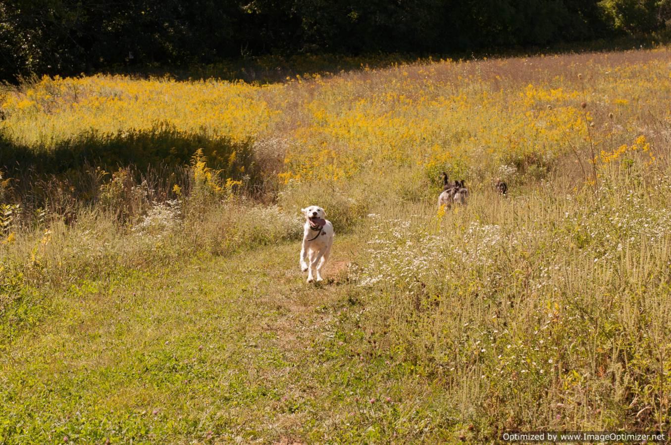 Schweitzer S Dog Park